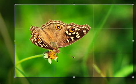 image cropping Archives - PHOTOGRAPHYAXIS