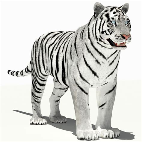 Kaos 3d White Tiger amur tiger white 3d 3ds