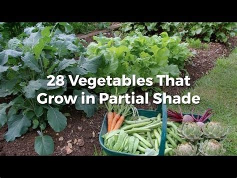 vegetables  grow  partial shade youtube