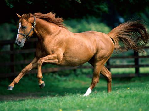 colores de cabellos bonitos imagenes de caballos febrero 2013