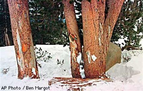 Sonny Bono Death | page one investigators hunt clues in bono ski death