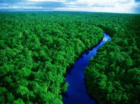 amazon hutan apa saja fakta informasi penting tentang hutan amazon