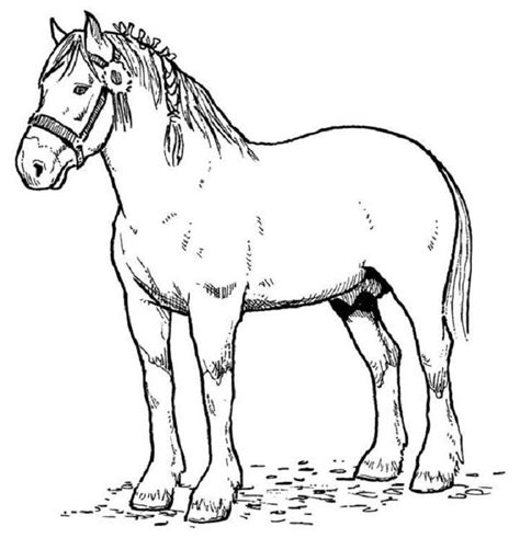 horse color page az coloring pages