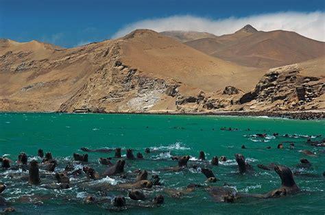 en la reserva nacional de paracas se inicia la temporada de verano y reserva de paracas una etapa especial del iij