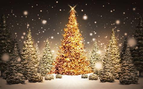 arboles hermosos de navidad arboles de navidad hermosos 1920x1200 fondo de pantalla 1711