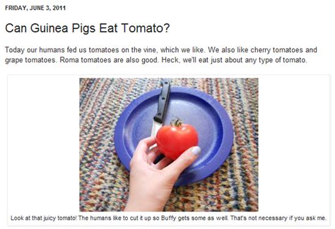 can my eat tomatoes shonali burke consulting how my guinea pigs became guest