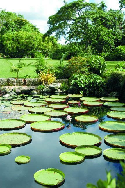Fairchild Tropical Botanic Garden Gardens And Tropical On