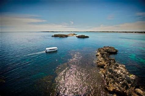 glass bottom boat tour rockingham glass bottom boat cruise through shoalwater bay picture