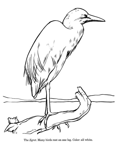 egret color great egret coloring pages coloring pages for free