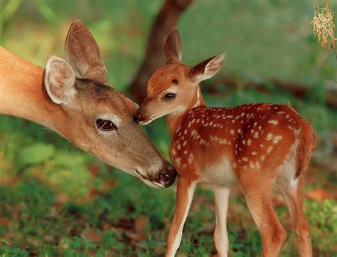 fawn images i am so fawn d of you