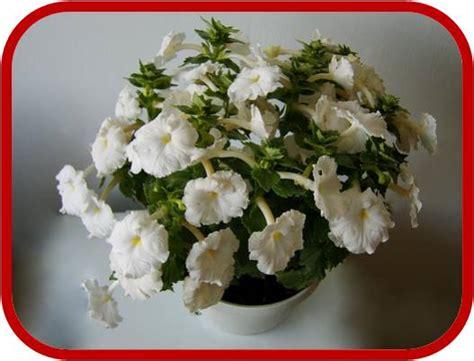 elenco fiori profumati piante e fiori