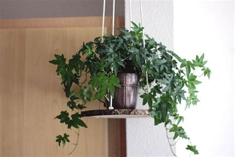 Diy Hanging Plant Holder - plant hangers diy plant holder