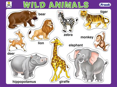 Galerry animals coloring online