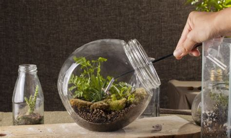 7 steps to making your own terrarium smart tips