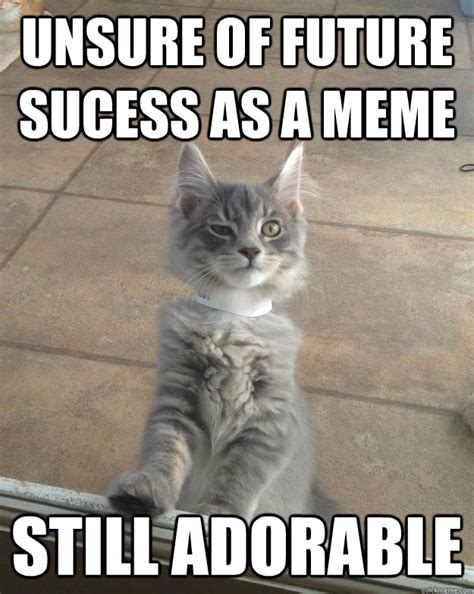 Adorable Meme - adorable kitten memes memes