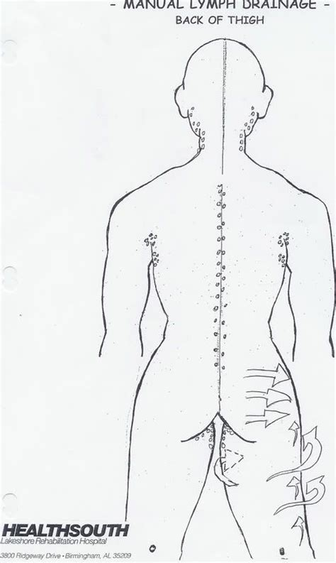 pattern tap alternative 31 best lymphatic drainage images on pinterest lymphatic
