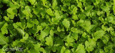 winter cover crop for vegetable garden winter cover crops for your vegetable garden