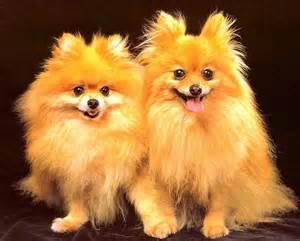 недорогие маленькие собаки породы название с фото
