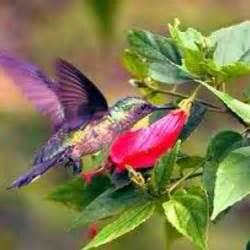 colorful hummingbirds colorful hummingbird birds