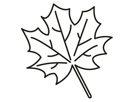 leaf colors leaves coloring pages coloringsuite