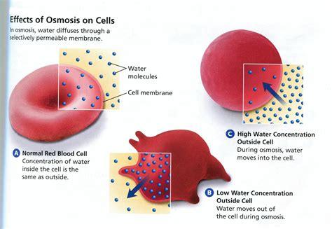 osmosis diagram osmosis diagrams diagram site