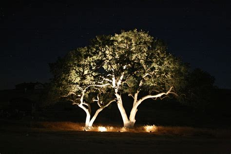 Outdoor Lighting Trees Home Decoration