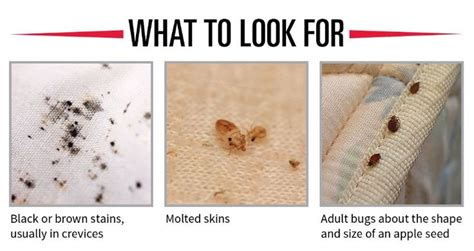 bed mites bites bed bugs bites google search bedbug prevention