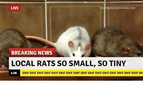 Rats Ass Meme - funny tiny memes of 2016 on sizzle baby it s cold outside