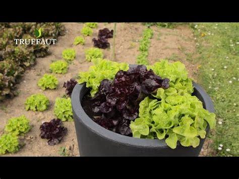 Planter Des Pensées En Jardiniere by Planter Des Salades En Pot Ou Jardini 232 Re Jardinerie