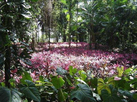 imagenes de venezuela flora y fauna yaracuy flora y fauna informaci 243 n