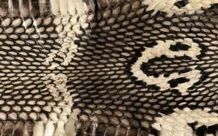 pics photos snake skin wallpaper