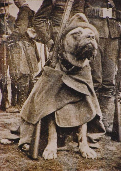 combat dogs ctmd stubby the