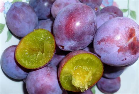 Buah Plum 16 manfaat dan khasiat buah plum untuk kesehatan khasiat