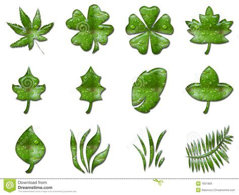 imagenes de hojas verdes hojas verdes im 225 genes de archivo libres de regal 237 as