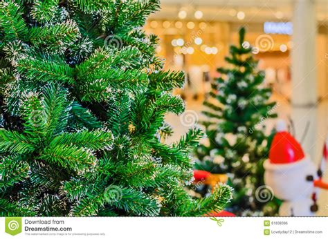 tree shopping tree in shopping mall royalty free stock image