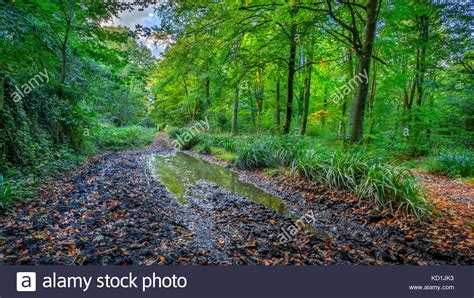 hillside golden retrievers missouri muddy forest path stock photos muddy forest path stock images alamy