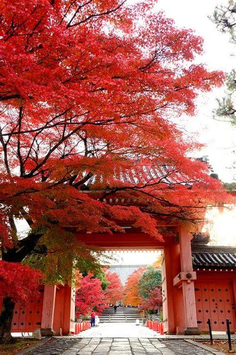 japan wallpaper pinterest beautiful japan places i d like to visit pinterest
