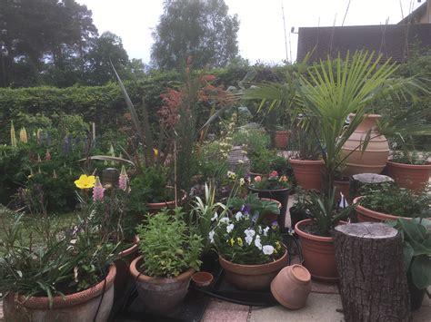 Patio Pots by The Nomadic Patio Pot Plants Part 2 Sunil S Garden
