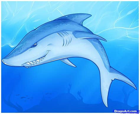can sharks see color how to draw an easy shark step by step sea animals