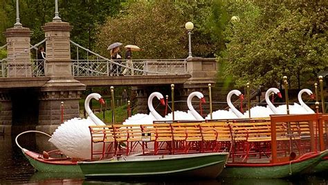 swan boats boston public garden swan boats returning to boston public garden lagoon