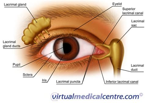 diagram mata interactive health eye anatomy
