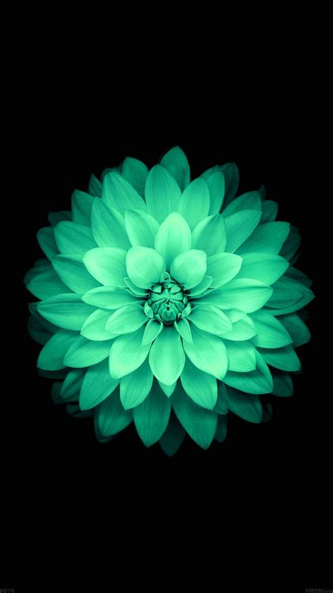 girly mint wallpaper tap and get the free app nature flowers mint beautiful