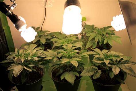 growing cannabis  cfls starter shopping list grow