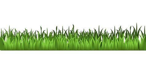 gambar rumput format png gambar vektor gratis rumput padang rumput hijau