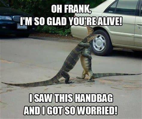 funny pictures lizards   Dump A Day
