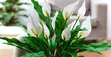 foto di piante da appartamento 6 effetti benefici delle piante da appartamento