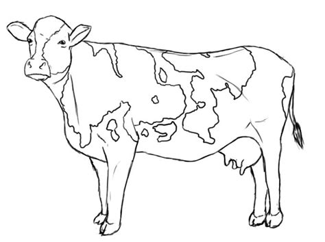 simple cow coloring page how to draw a cow the swing pencil eraser and how to draw
