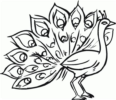 free printable peacock coloring pages for kids