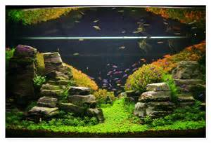 Aquarium Aquascapes by Aquascape On Aquascaping Planted Aquarium And Aga