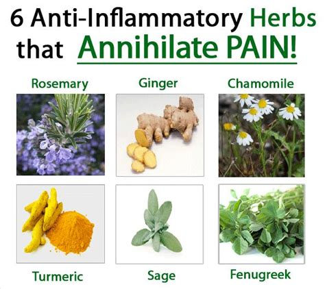 anti inflammatory taking anti inflammatory herbs to fight and eliminate